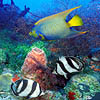 Коралловый риф - Багамские острова. Travel.Ru