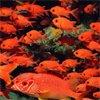 подводный мир - Мальдивы. Travel.Ru