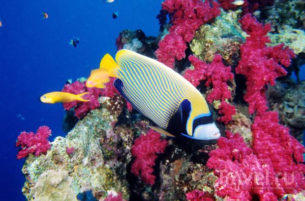 Нувейба подводный мир красного моря