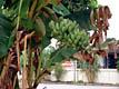 """""""В бананово-лимонном Сингапуре..."""" - фотографии из Сингапура - Travel.ru"""