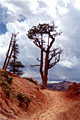 Великие каньоны Америки - фотографии из США - Travel.ru