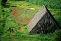 Зеленые на Острове Свободы - фотографии с Кубы - Travel.ru