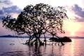 Плавающие острова - фотографии из Индии - Travel.ru