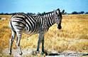 Африканский альбом - фотографии из Ботсваны - Travel.ru