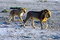 Намибия - фотографии из Намибии - Travel.ru
