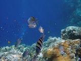 Красное море изнутри / Фото из Египта