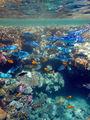 мелководье / Фото из Египта