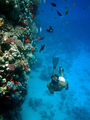 крупная рыба / Фото из Египта
