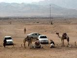 верблюды в ожидании туристов / Фото из Египта