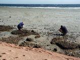туристы-фотографы и отлив / Фото из Египта