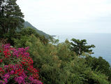 и везде яркие цветы / Фото из Доминиканской Республики