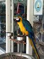 попугай для привлечения туристов / Фото из Доминиканской Республики