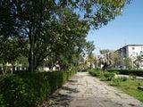 Парк у набережной Сухума / Абхазия