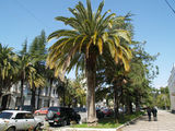 Улица в Сухуми / Абхазия