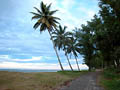 Не тяните лемура за хвост - фотографии с Мадагаскара - Travel.ru