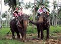 Таиланд: страна, куда хочется вернуться - фотографии из Таиланда - Travel.ru