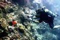 Палау - фотографии из Палау - Travel.ru