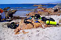 Салала. Дайвинг в Омане - фотографии из Омана - Travel.ru