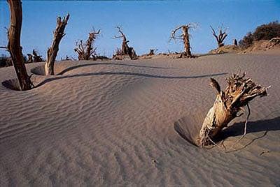 Такла-Макан - заманчивая и таинственная пустыня - ©Жэньминь Жибао