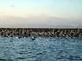 В погоне за царь-рыбой - фотографии из Мексики - Travel.ru