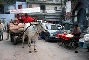 Погонщик мула / Фото из Индии