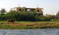 Кусочек берега с тощей коровой / Фото из Египта