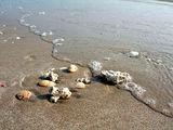 Отмель на побережье Красного моря / Фото из Египта