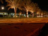 Пальмы на дороге возле отеля / Фото из Египта