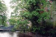 Баден-Баден. Дерево / Германия