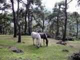 Турецкие лошадки на острове Баюкада / Фото из Турции
