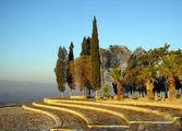 Кипарисы и пальмы в лучах солнца / Фото из Турции