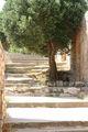 Сейчас здесь живут только деревья / Фото из Греции
