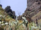 Типичный кактусовый пейзаж / Фото из Испании