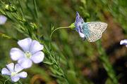 Цветы привлекают насекомых / Фото с Украины