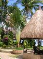 Филиппины, отель 'Себу Марин Бич Ресорт' / Индонезия