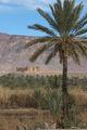 финиковая пальма - хлеб, кров, дрова / Фото из Марокко