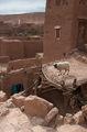 бараны-высотники / Фото из Марокко