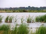 Фламинго / Фото из ЮАР