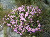 Интересная растительность / Фото из ЮАР