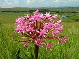 Национальный парк / Фото из Свазиленда