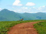 Зебры / Фото из Свазиленда