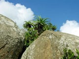Скалы и растительность / Фото из Свазиленда