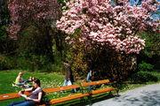 Цветущие парки / Фото из Австрии