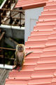 По крыше на балкон / Фото из Малайзии