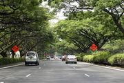 Затененные деревьями улицы / Фото из Малайзии