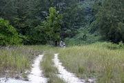 Дорога на пляж напоминает среднюю полосу России / Фото из Малайзии