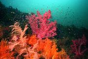 Мягкие кораллы и маленькие рыбки / Фото из Южной Кореи
