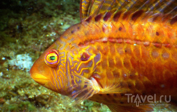 Фото рыбки под водой