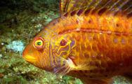 Золотая рыбка / Фото из Южной Кореи