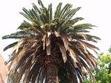 Черногорская пальма / Фото из Черногории